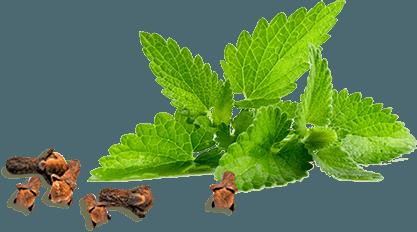 gvozdika myata sl1